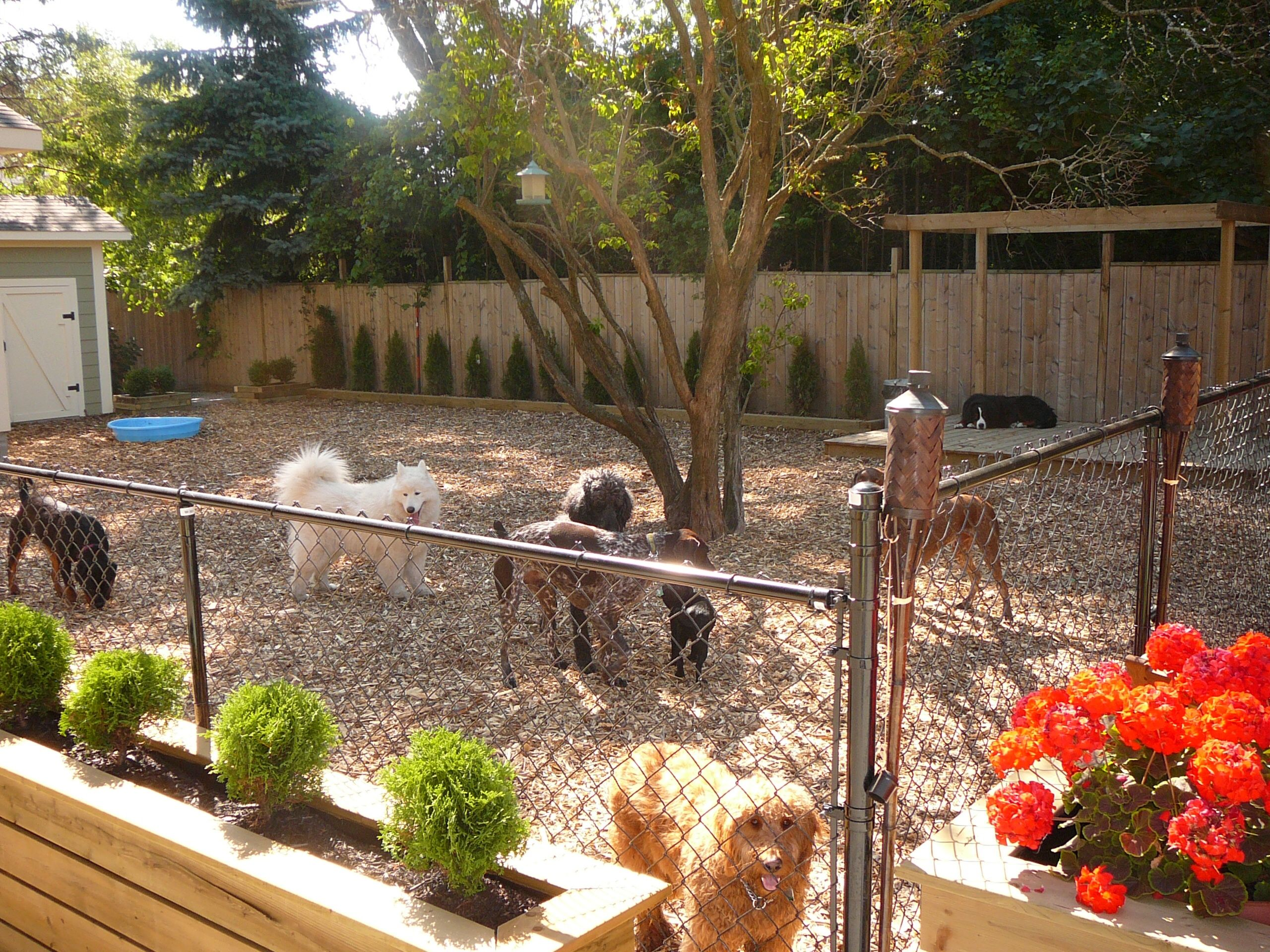 the dogs now have a safe and secure area to play outside this