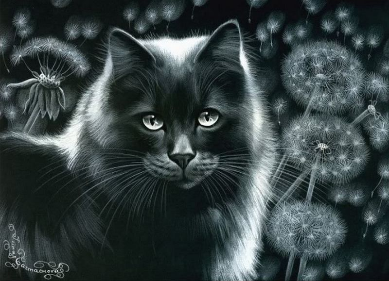 дело, черные коты блестящие картинки приходом весны