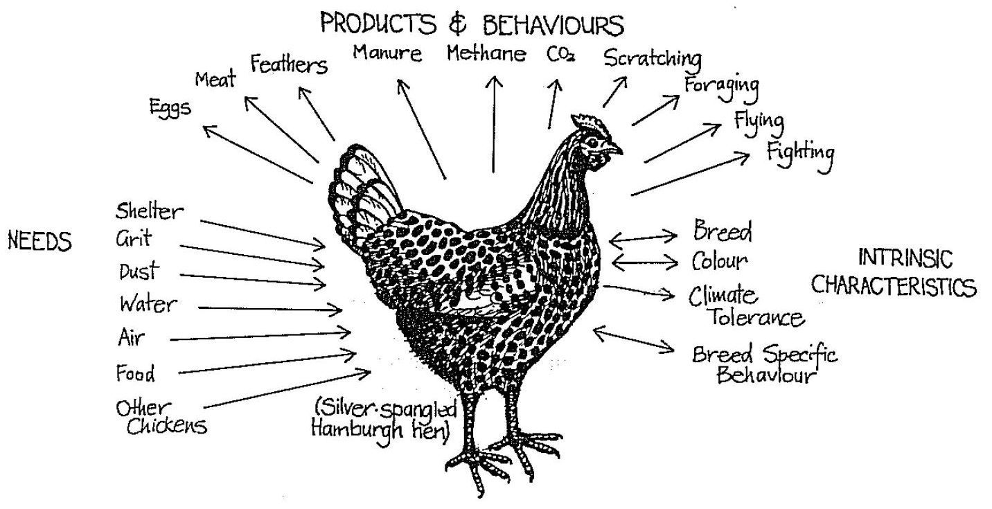 chicken input output permaculture