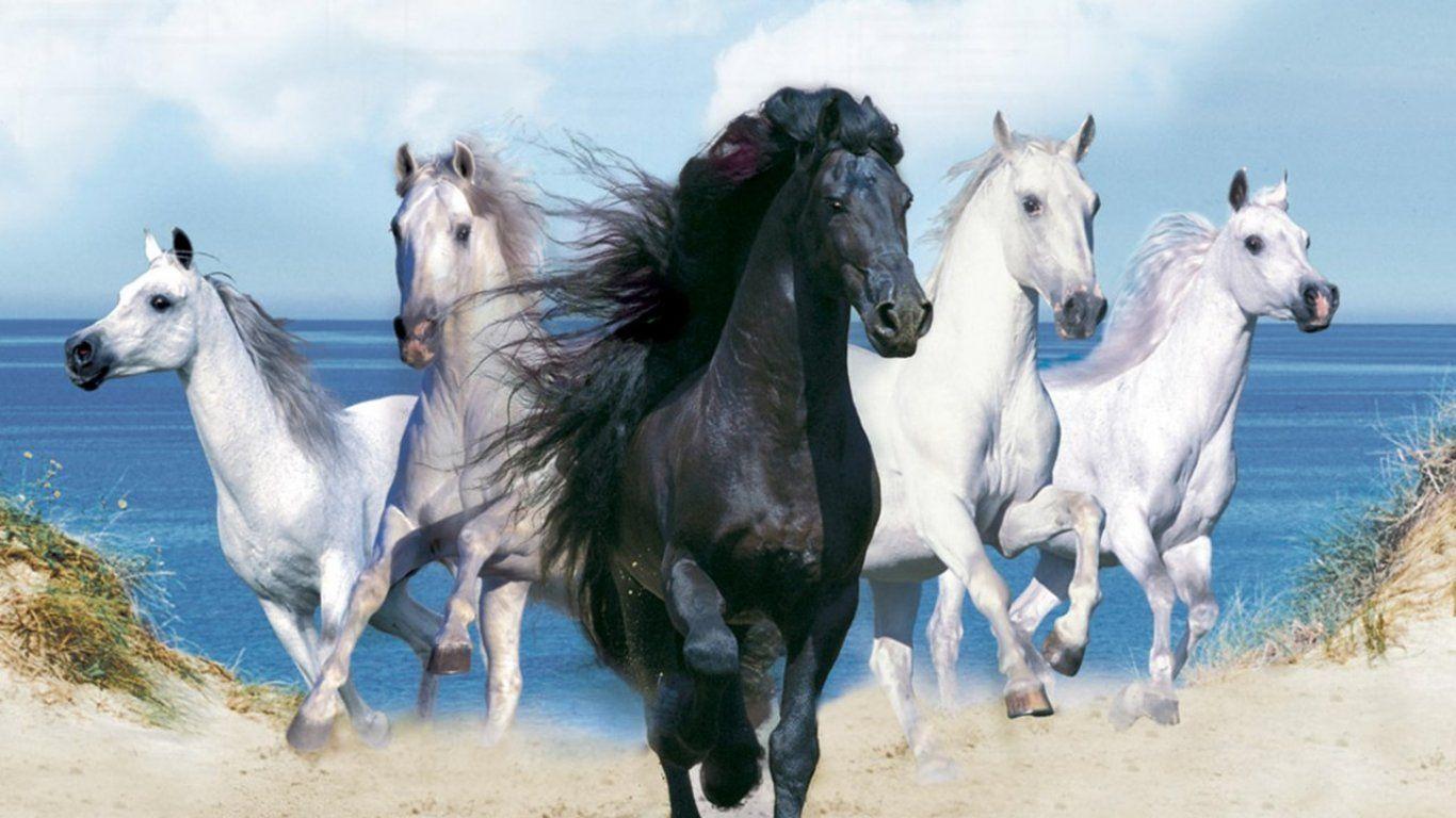 Fantastic Wallpaper Horse Iphone 5s - 74b9ca5071818e2359c899baf49120df  Collection_394124.jpg