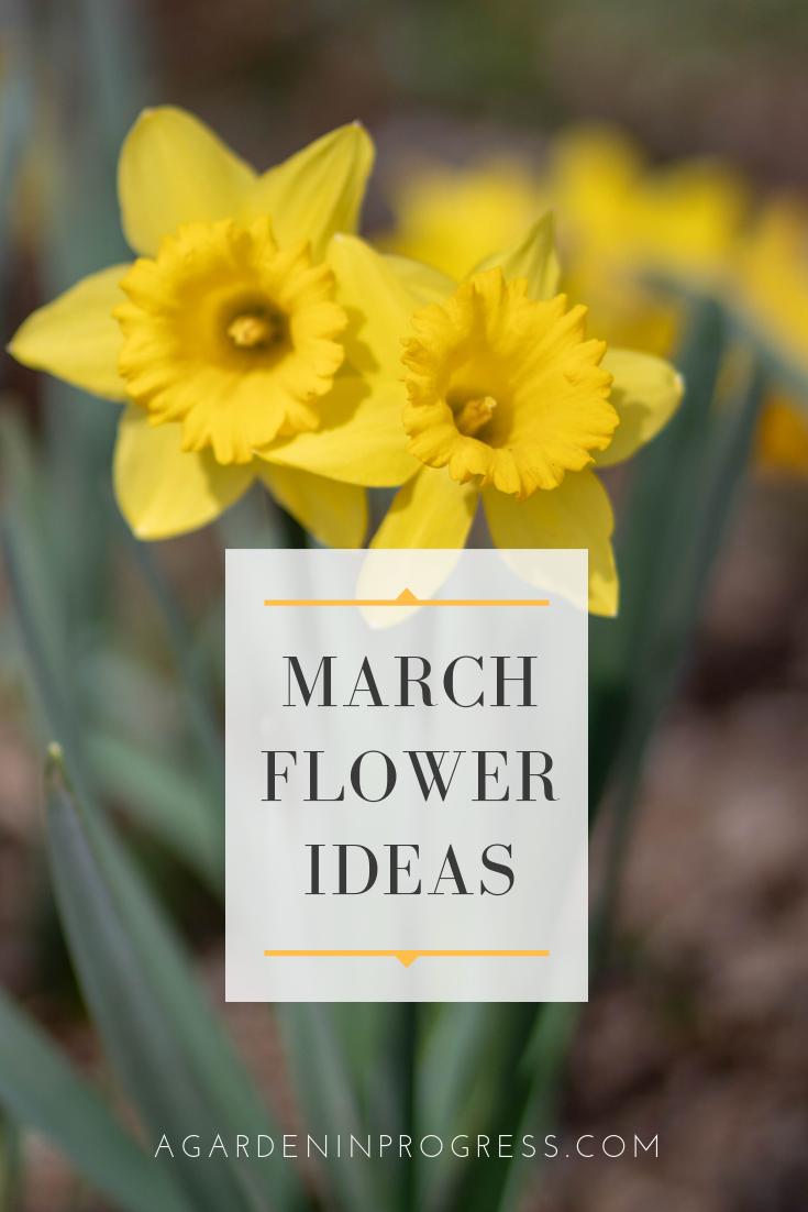 March Blooms 2019 A Garden In Progress March Gardening Checklist Bloom Next Flowers