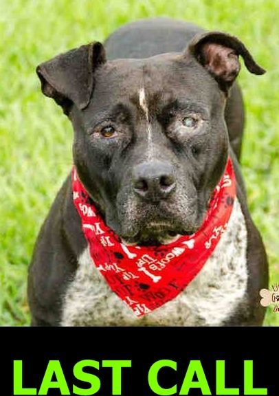 90eaeca71ac54a1d0acf6413e90f421d Jpg 406 576 Homeless Pets Pitbull Terrier Dog Adoption