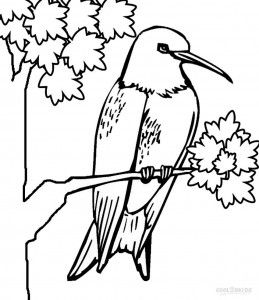Hummingbird Coloring Page | Adult Coloring | Pinterest ...