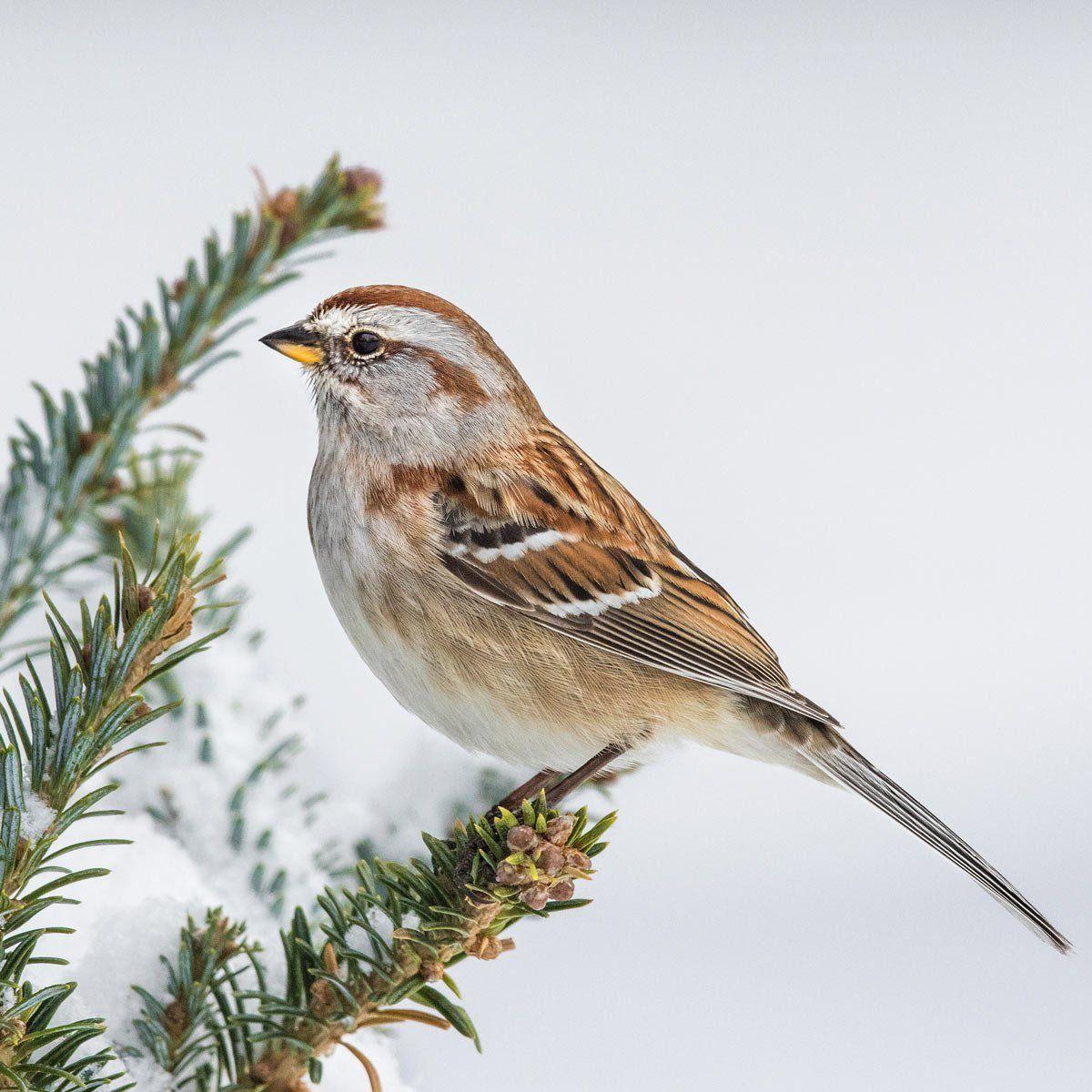 The Best 20 Ways To Attract Winter Birds