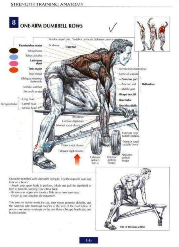 Pin de Giannis Pitsoulis en Workouts | Pinterest | Musculacion ...