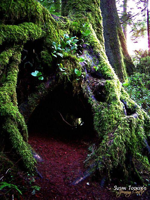 "lieserl:    loki-mindfucks:    ""Enter these enchanted woods, You who dare.""    OKAY"