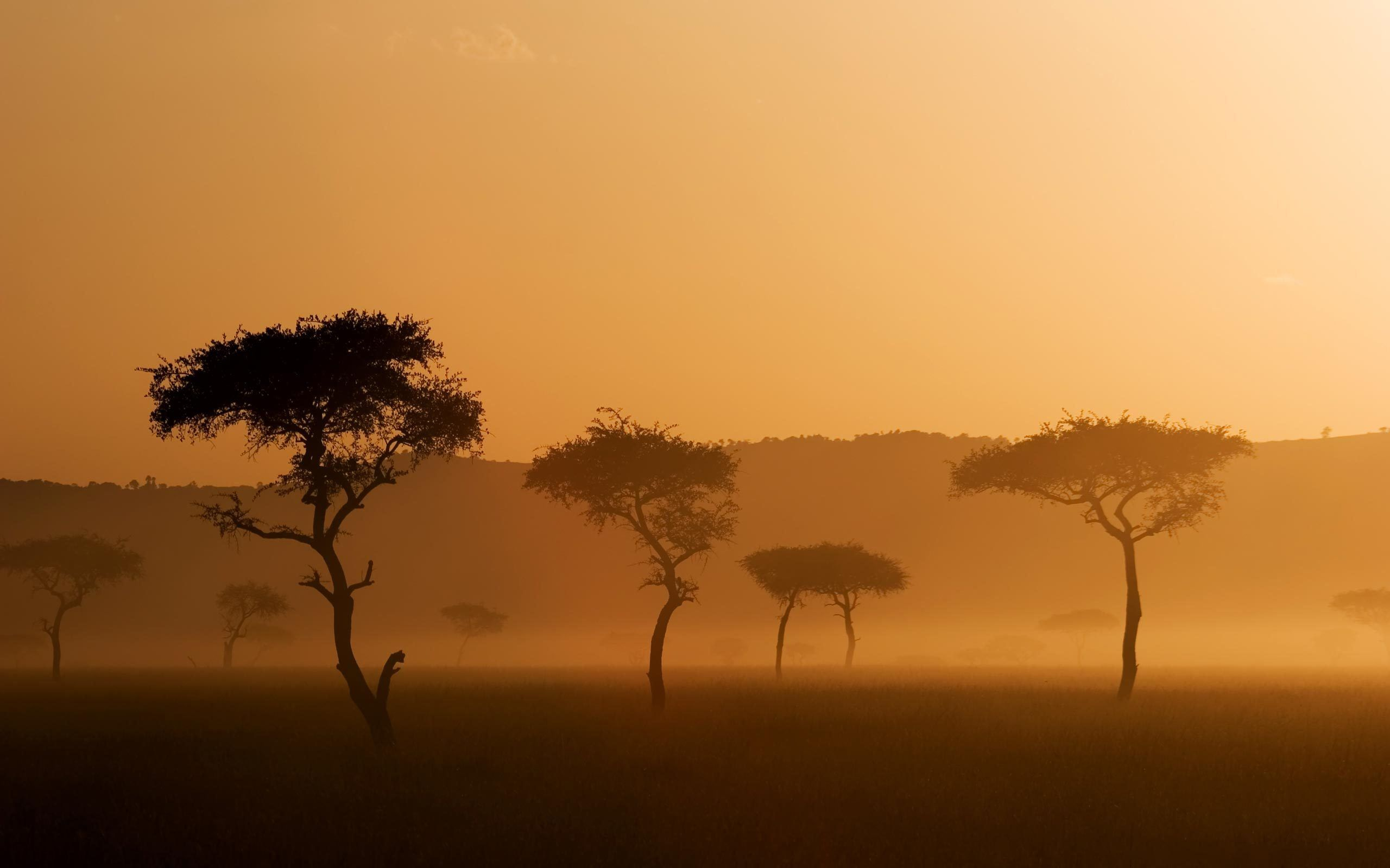 Savannah: African-Savannah-Sunset.jpg (2560×1600) | Biomes ...