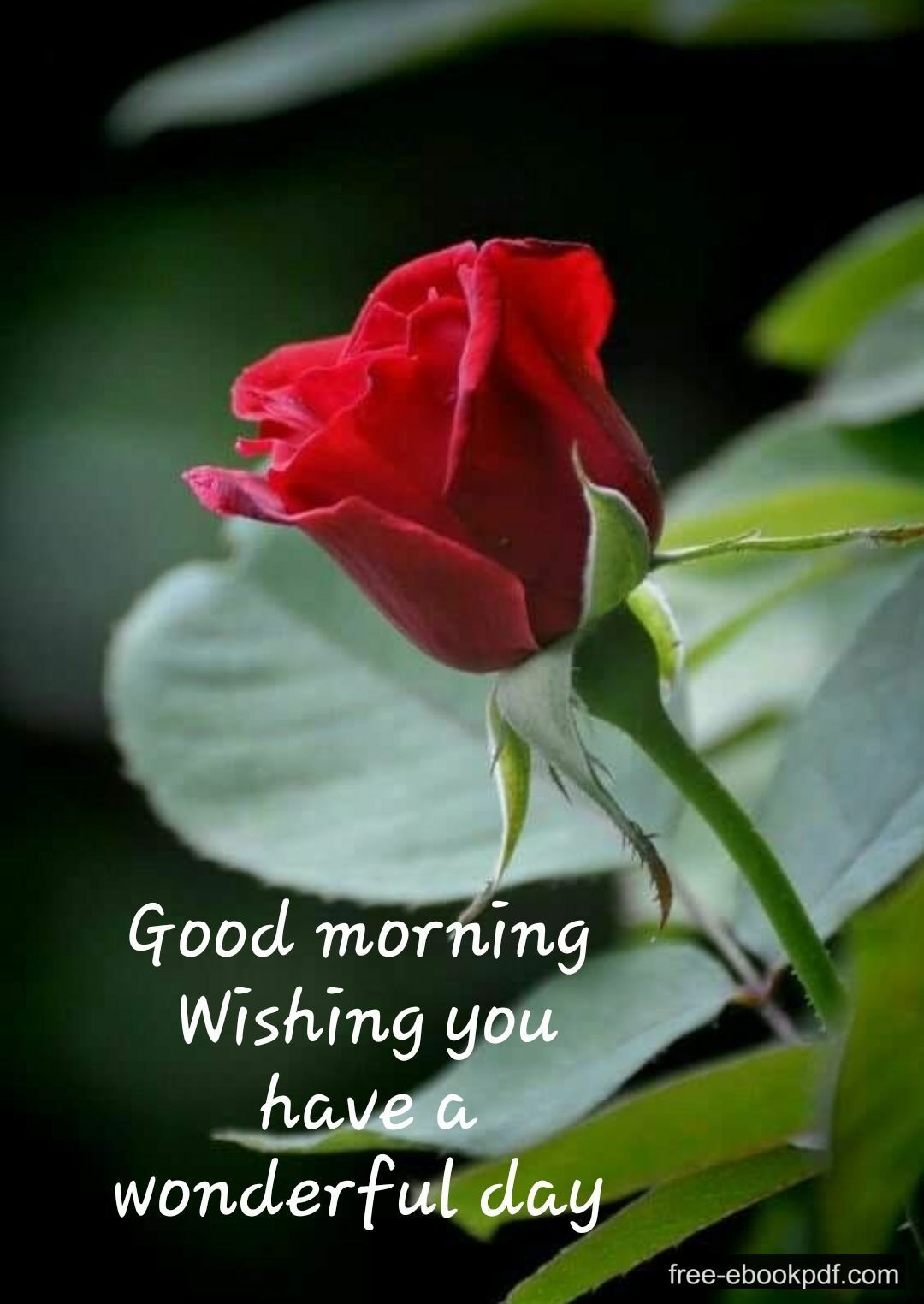 Good Morning Message For Husband Good Morning Quotes Good Morning Love Messages Love Good Morning Quotes