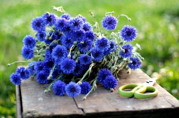 Only The Beginning Love N Fresh Flowers Flower Farm Flowers Blue Flowers