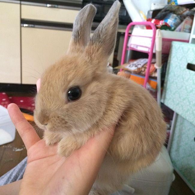 画像あり うちのうさぎが天使すぎるので貼っていく Vipper速報 うさぎ かわいいハムスター 子ウサギ