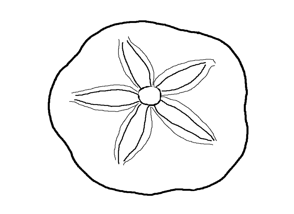 Seashell Coloring Pages For Adults