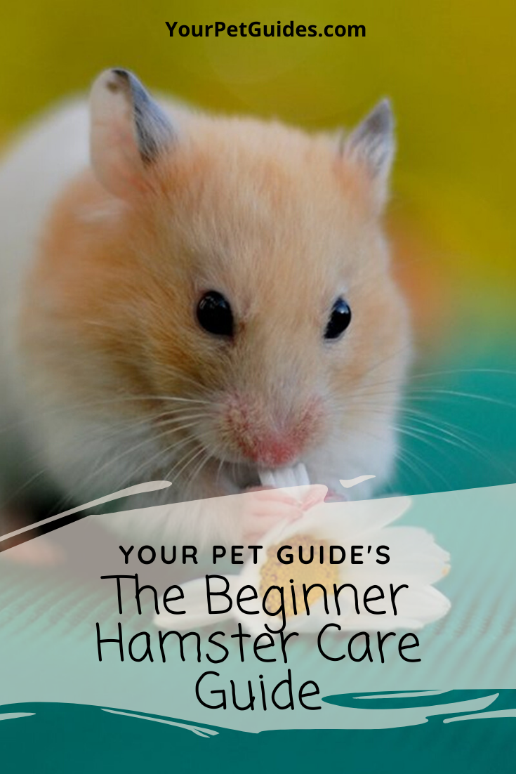 Pin On Small Pet Guides And Help