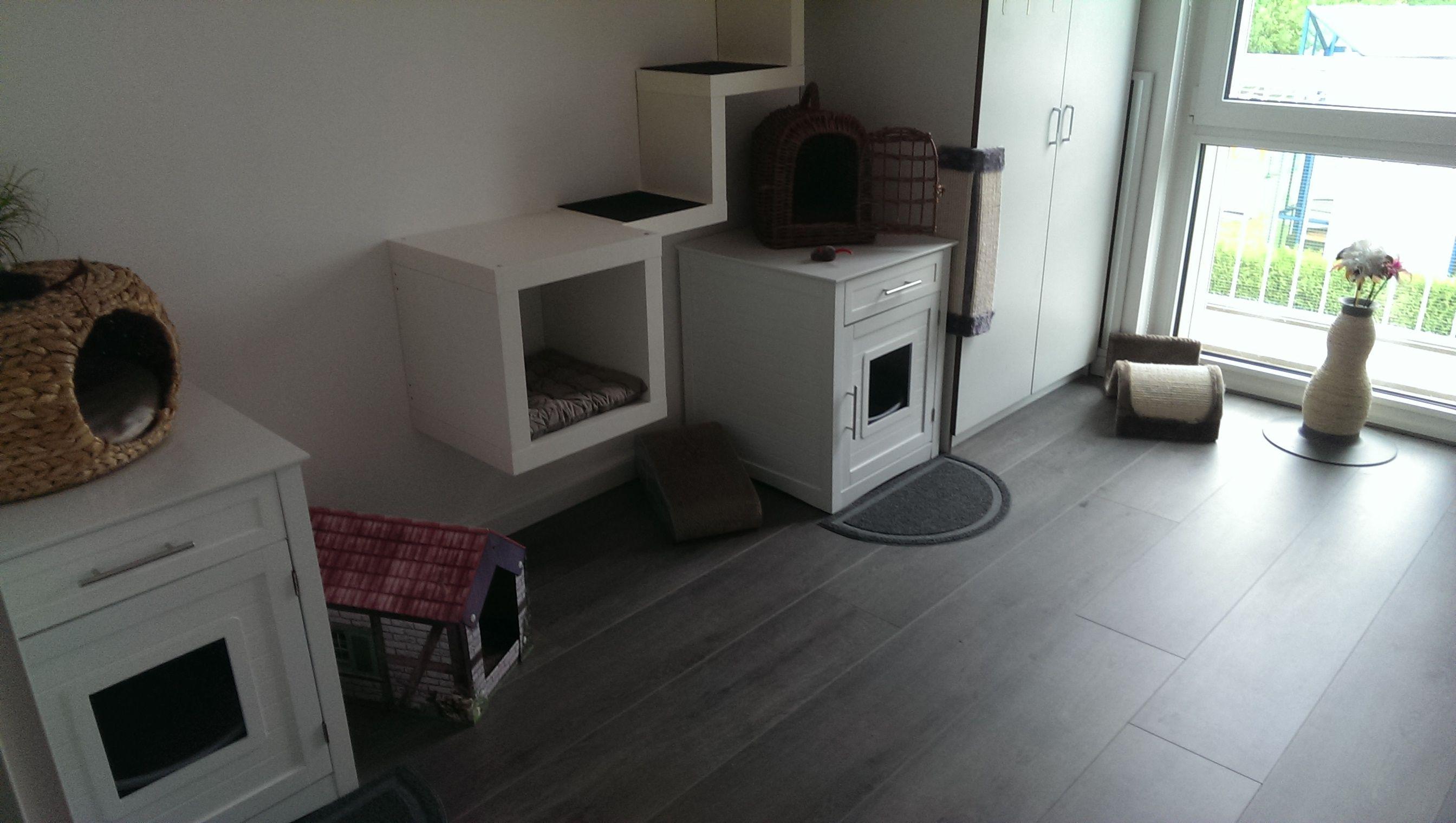 Kattenkamer #cats #kattenkamer #litterbox #kattenbak #hiding #kat #catsroom #cattoys