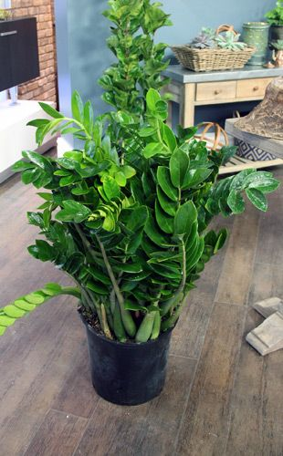 The Marilyn Denis Show Maintenance Free Shrubbery