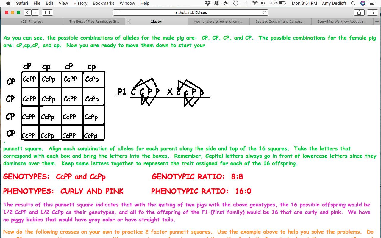 Mendelian Genetics Dihybrid Cross