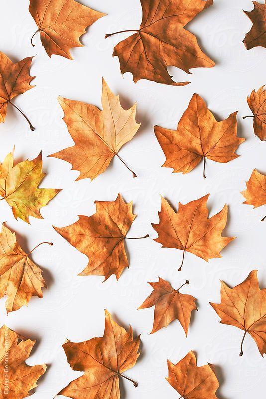 Maple Leaf composition. Autumn. by Eduard Bonnin #fallbackgrounds