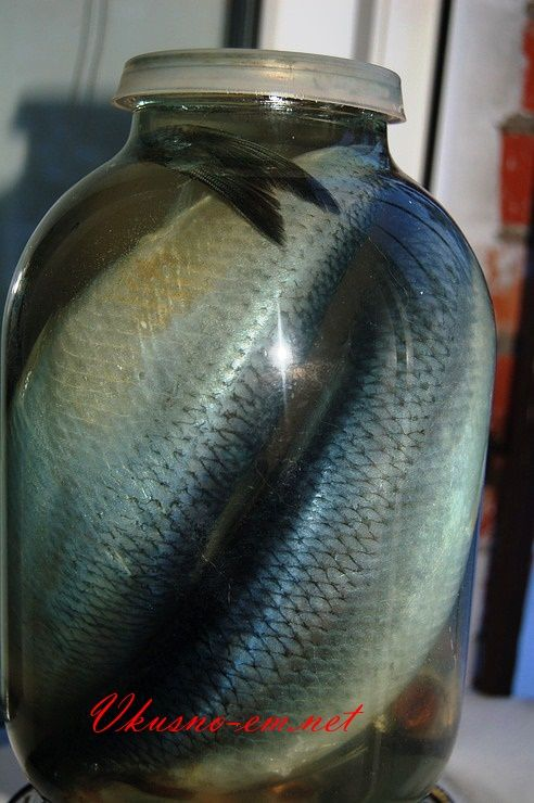 Малосольная селедка в домашних условиях | Рыбные рецепты ...
