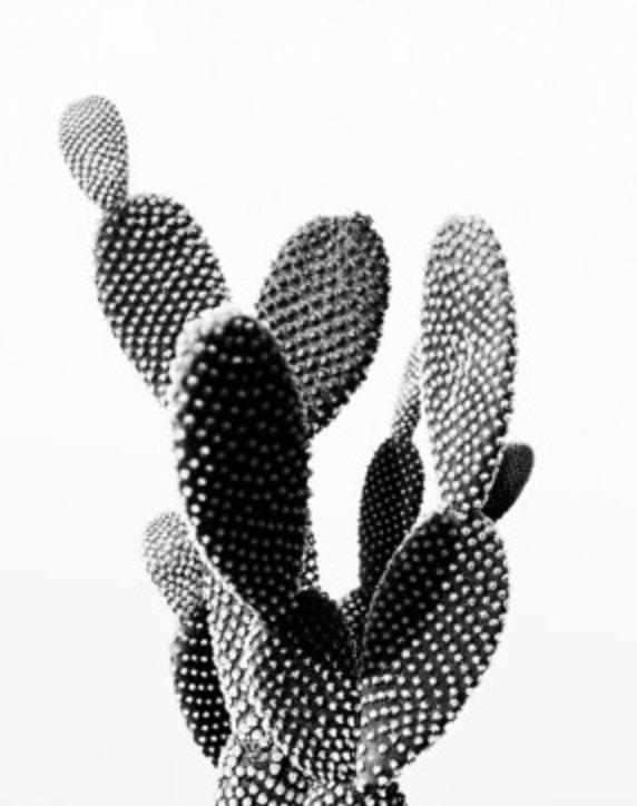 cactus photo printable file