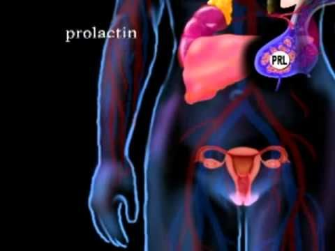 Animated Video Of The Endocrine System Ap 2 Endocrine System