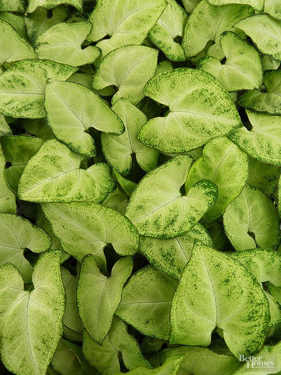 Indoor Plants For Low Light Low Lights Bright Green And