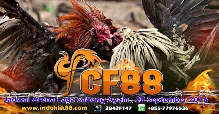 Sabung Ayam    Jadwal Arena Laga Sabung Ayam, 20 September 2016: Jadwal Arena Laga sabung Ayam Jadwal Arena Laga… #JadwalPertandingan
