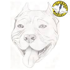 How To Draw A Pitbull Face Google Search Pitbull Drawing