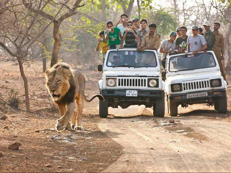Sasan Gir Jungle Safari Tour Package Gir Forest National Park
