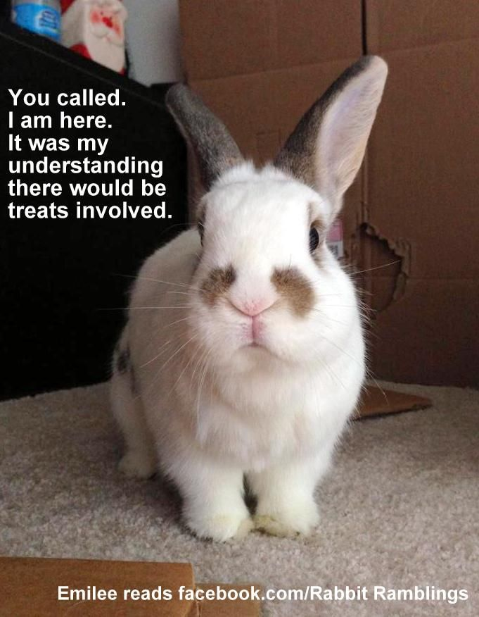 Rabbit Ramblings Funny Bunny Memes Cuties Funny Bunnies Bunny