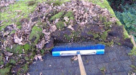 How To Remove Moss On Roof Green Roof Roof Garden Roof
