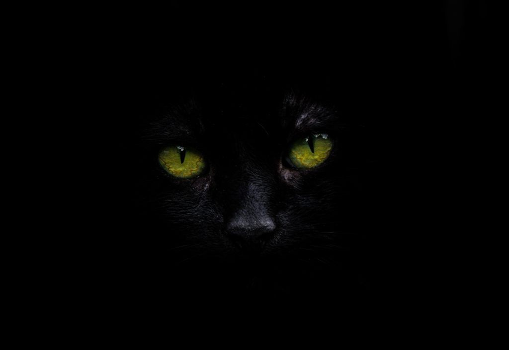 How Did Cats Become Associated With Witches And Evil Black Cat Pictures Cats Animal Photo