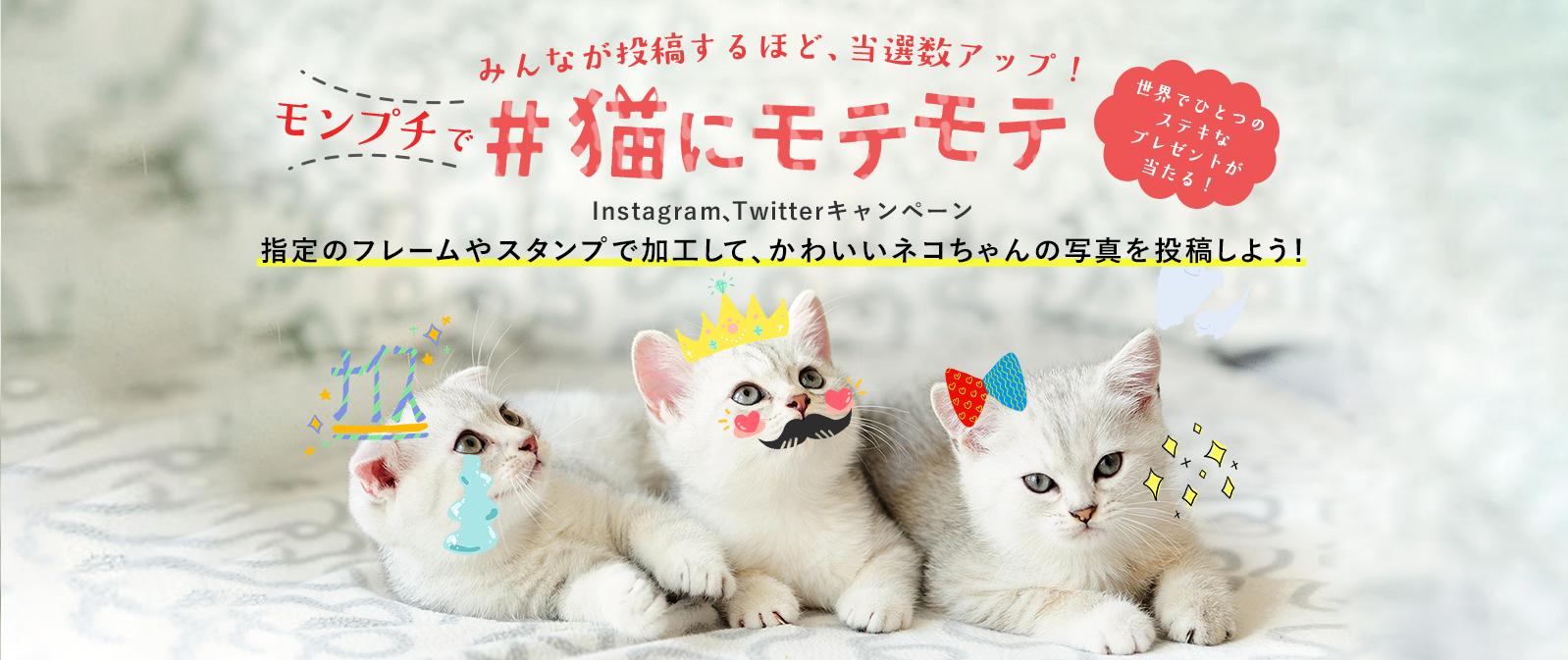 みんなが投稿するほど 当選数アップ モンプチで 猫にモテモテ Instagram Twitterキャンペーン 指定のフレームやスタンプで加工して かわいいネコちゃんの写真を投稿しよう Lp デザイン Twitter バナー ペット
