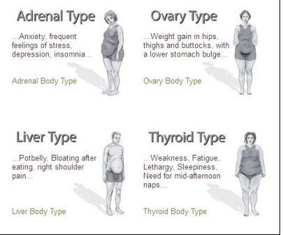 e7bbcdfd21c5e THe adrenal body type - Google Search