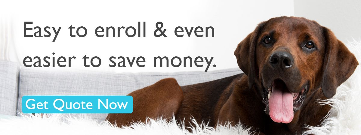Easy To Enroll And Even Easier To Save Money Get Quote Now Pet Insurance For Dogs Pet Insurance