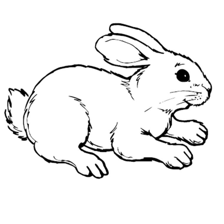 explore animal coloring pages and more - Colour Pictures To Print