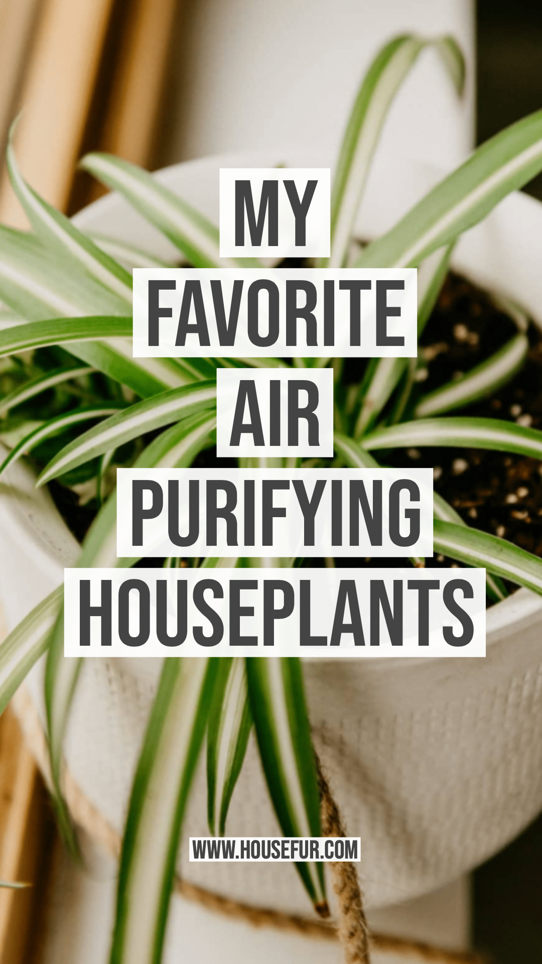 My Favorite Air Purifying Houseplants House Fur Air