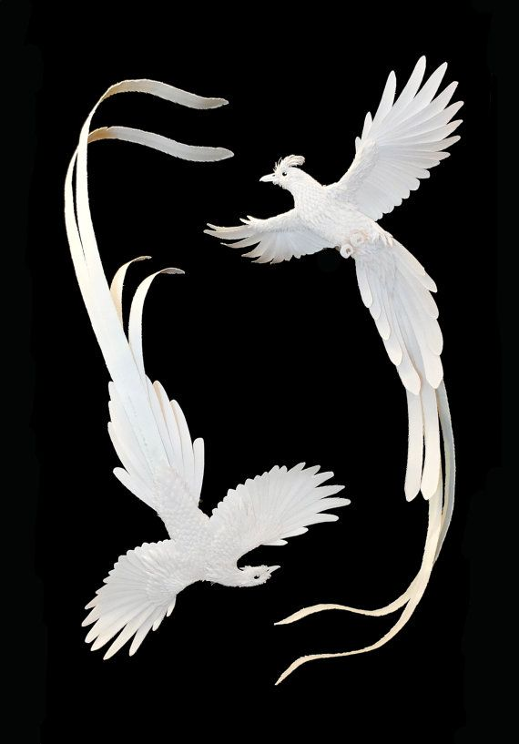 Hand cut paper birds displayed in frame. by ZackMclaughlin on Etsy