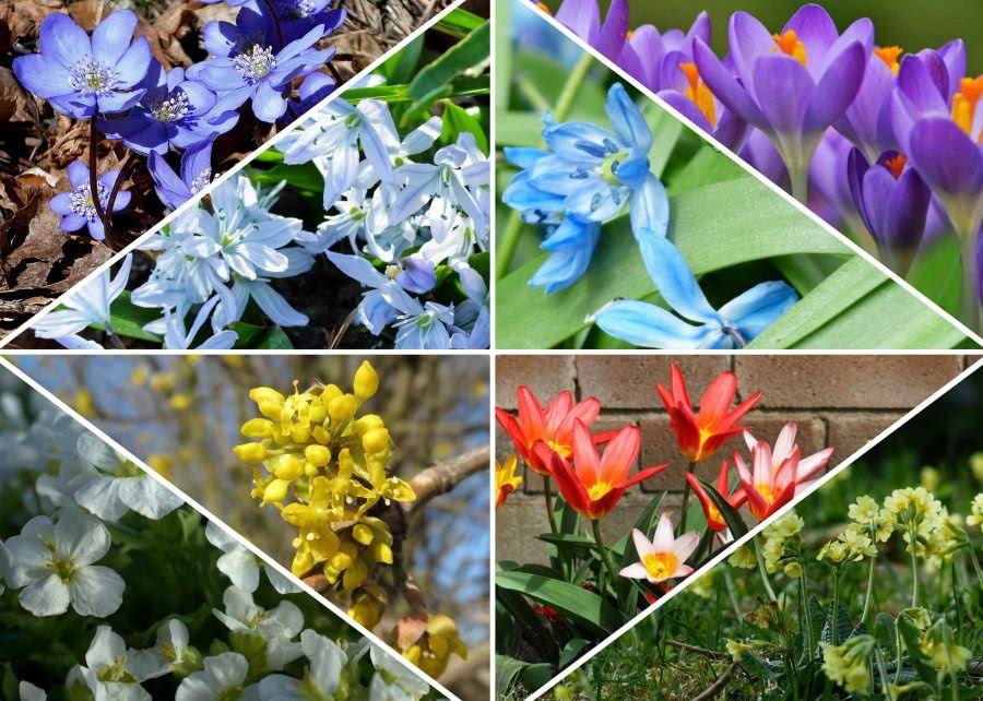 Zwiastuny Wiosny Co Kwitnie W Marcu Zielony Ogrodek Plants