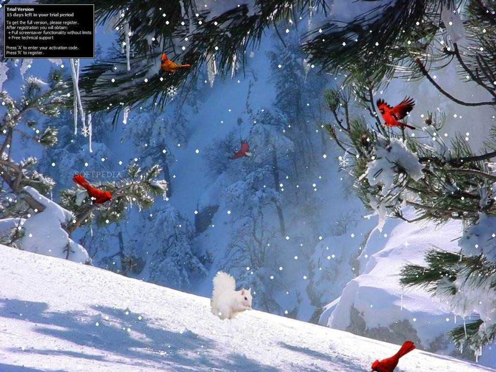 Winter Wallpapers Full HD Group 1920×1080 Winter Screen