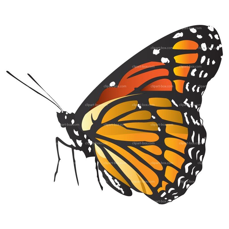 Butterfly side view. Flower clipart art clip
