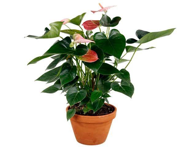 plante interieur facile d'entretien