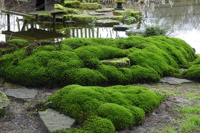 moos, moose in japanischen gärten als wichtigste bodendecker, Garten ideen