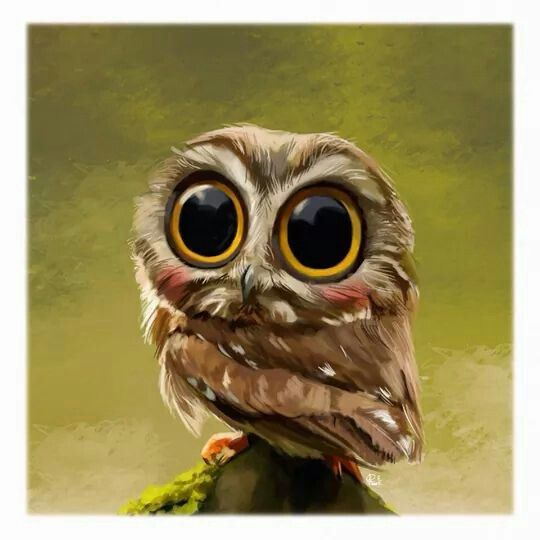 Explore Big Eyes Baby Owls And More
