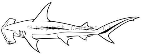 Scalloped Hammerhead (Sphyrna zygaena)   black outline illustration  vector Animals
