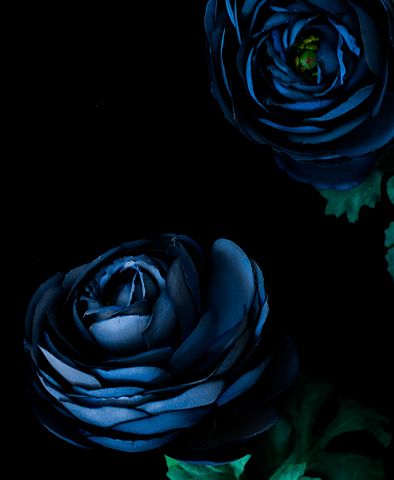 Free Image On Pixabay Dark Blue Flower Petal Green Blue Flower Wallpaper Dark Blue Flowers Flowers