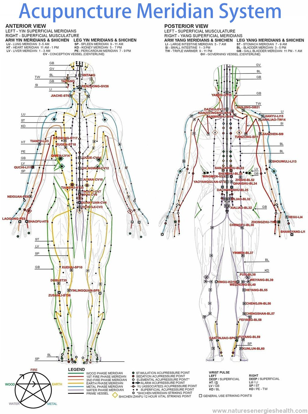Image Result For Meridian Acupuncture Chart Accupuncture