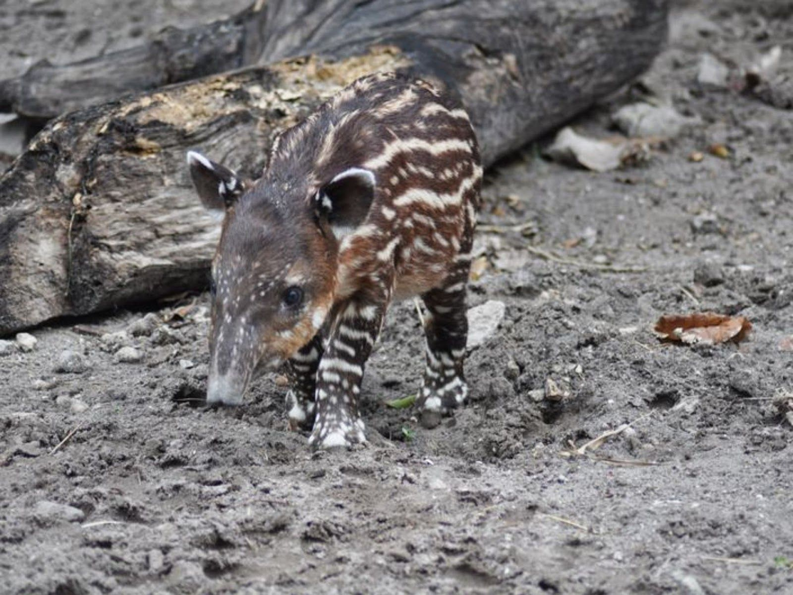 Cute new zoo babies from across the USA | Balcan Expres