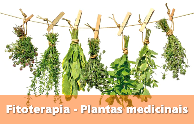 Fitoterapia – Plantas medicinais | http://saudenocorpo.com/fitoterapia-plantas-medicinais/