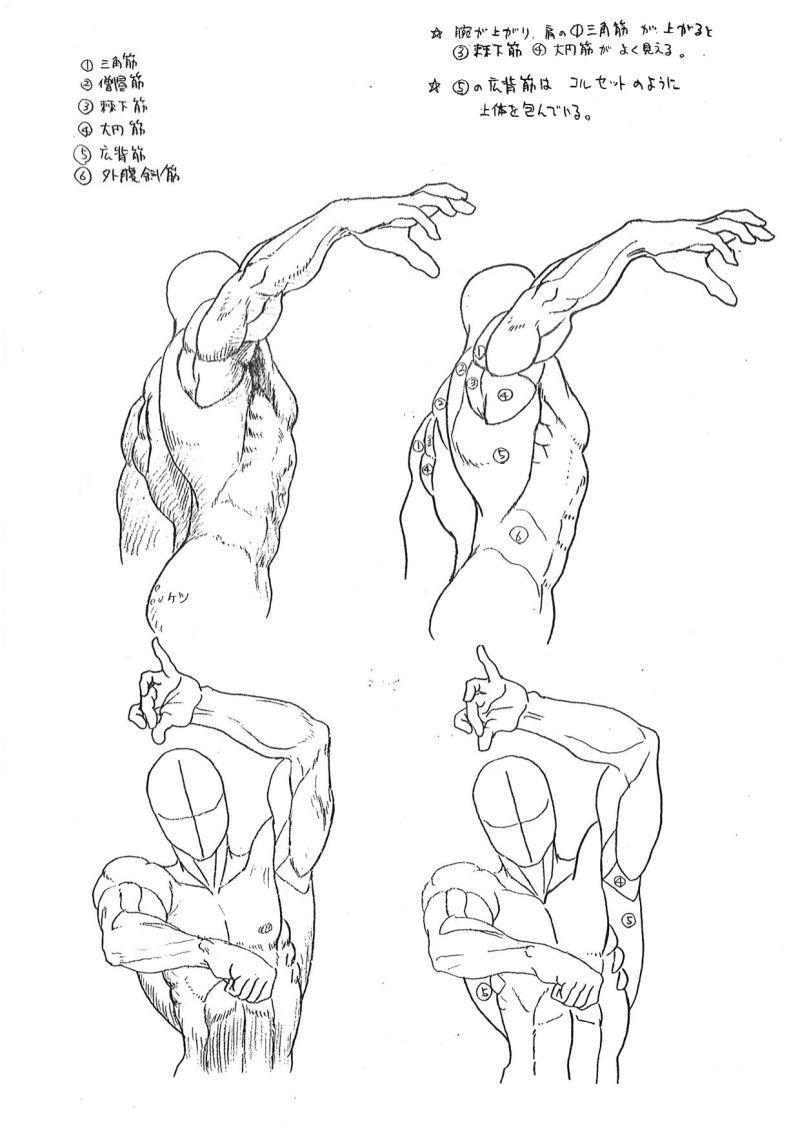 Capcoms Human Anatomical Reference For Artists Anatomy Anatomy
