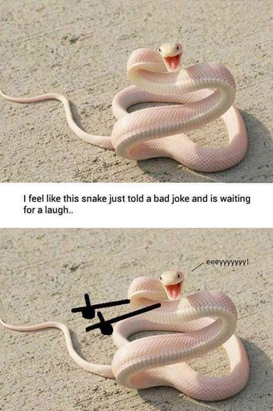 Big snake safe sex joke