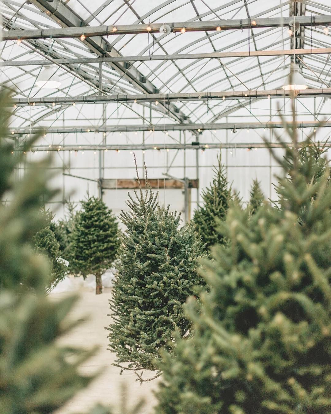 Ready To Trim The Tree Visit Our Heated Indoor Christmas Tree Forest To Pick Your Perfect Tree Christmas Tree Forest Indoor Christmas Christmas Tree